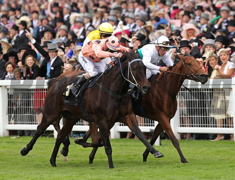 Black Caviar wins the Diamond Jubilee Stakes at Royal Ascot, June 23, 2012.<br /> Photo by Trevor Jones