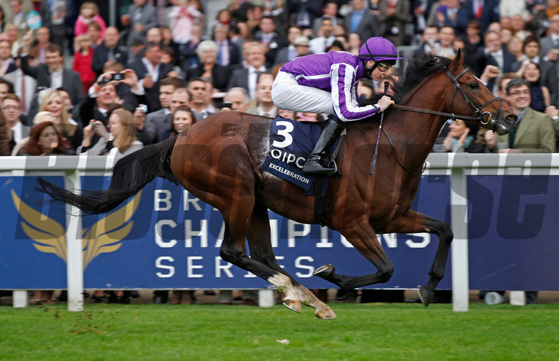 Racing from Ascot 20/10/12 Queen Elizabeth 11 stakes<br /> Excelebration wins<br /> Trevor Jones Photo