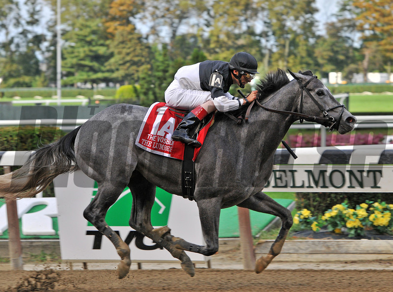 The Lumber Guy, John Velazquez up, wins the Gr1 Vosburgh Invitational at Belmont...<br /> © 2012 Rick Samuels/The Blood-Horse