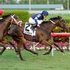 Mystic Love wins the 2012 Dania Beach.<br /> Coglianese Photos/Leslie Martin