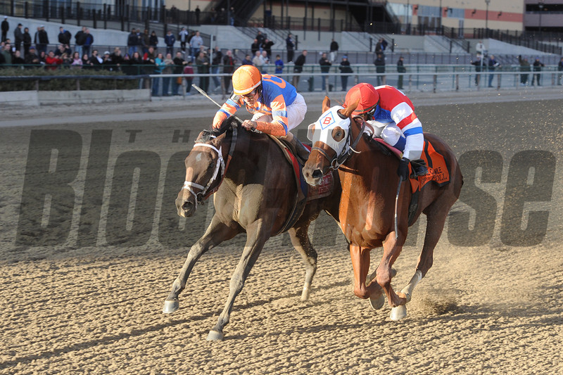 Stay Thirsty wins the 2012 Cigar Mile.<br /> Coglianese Photos/Adam Mooshian