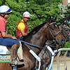 Trainer Ken McPeeks longshot Belmont entry of, Atigun and Unstoppable U, waiting to work Friday morning June 1st...<br /> © 2012 Rick Samuels/The Blood-Horse