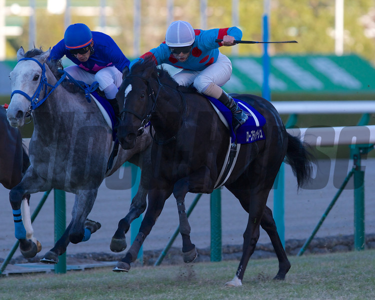 Robe Tissage wins the Hanshin Juvenile Fillies at Hanshin Racecourse on Sunday, December 9th, 2012.<br /> Photo by Kate Hunter