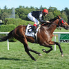 Point of Entry wins the 2012 Sword Dancer.<br /> Photo by Coglianese Photos