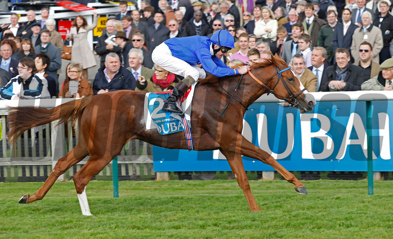 Racing from Newmarket. 13/10/12, The Dubai Dewhurst Stks.<br /> Dawn Approach wins.<br /> Photo by Trevor Jones