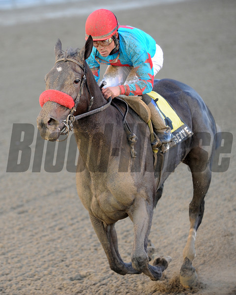 Called to Serve wins the 2012 Discovery.<br /> Coglianese Photos
