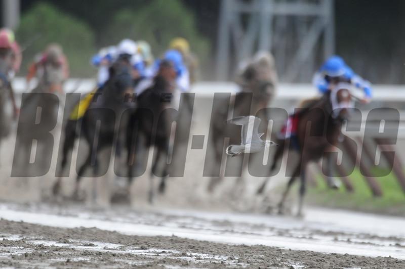 Alpha wins the 2012 Jim Dandy.<br /> Coglianese Photos