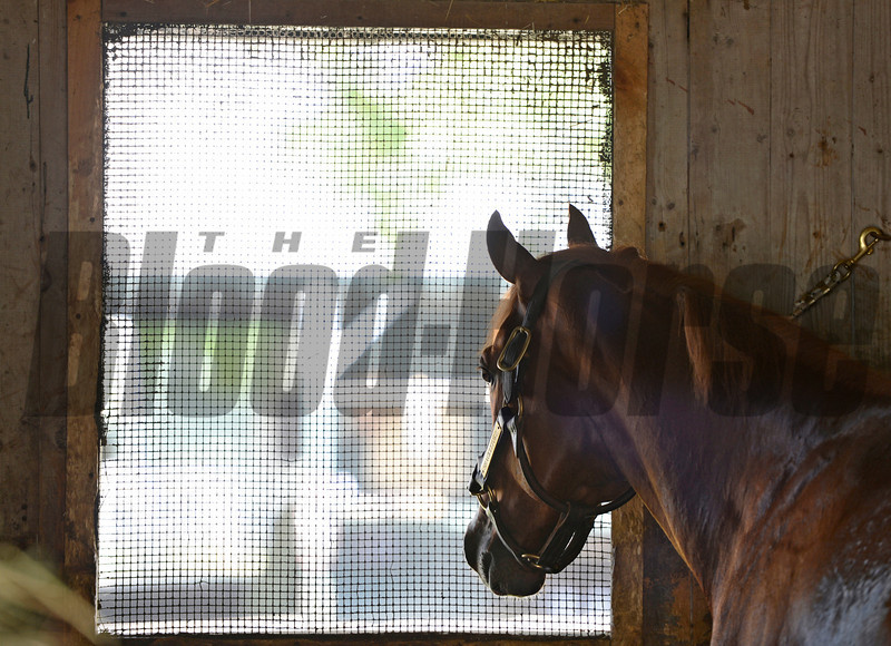 Schackleford enjoys his first full day at the Saratoga Race Course in Saratoga Springs, N.Y. August 3, 2012.   (Skip Dickstein