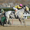 Sportswriter wins the Thunder Rumble Division of the NY Stallion Series.<br /> Coglianese Photos