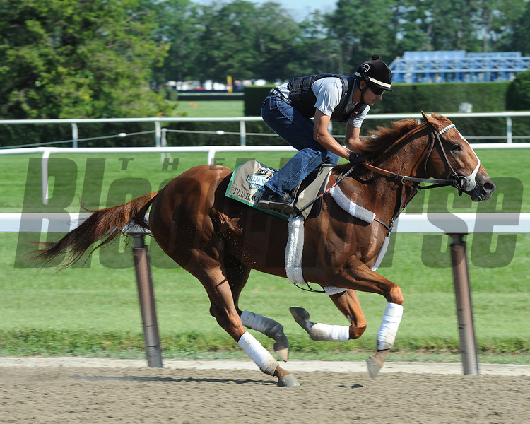 I'll Have Another - Belmont Park, May 31, 2012.<br /> Photo by Coglianese Photos