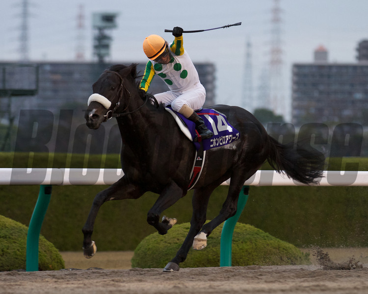 Nihonpiro Ours beats a field of G1 winners in the 13th Japan Cup Dirt at Hanshin Racecourse in Takarazuka, Japan.<br /> Photo by Kate Hunter