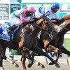 Shackleford, Caleb's Posse in the Met Mile.<br /> <br /> Photo by Coglianese Photos