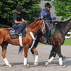 Kentucky Derby and Preakness winner I'll Have Another, on his way to the main track at Belmont, Saturday morning, May 26th.<br /> <br /> Photo by Rick Samuels