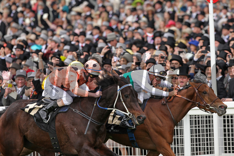 Royal Ascot 23/6/2012. The Diamond Jubilee Stakes.<br /> On the line Black Caviar wins (salmon spots) from Moonlight Cloud (right) Restiadargent (sandwiched)<br /> Photo by Trevor Jones