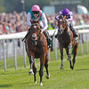 Rcing from York 22/8/12. Juddmonte International.<br /> Frankel and Tom Quealy come home in style.<br /> Photo by Trevor Jones