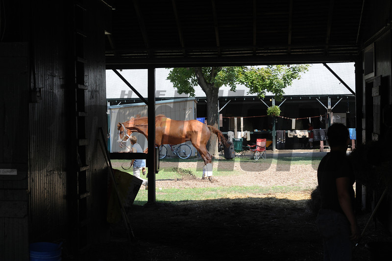 Shackleford at Saratoga - August 2, 2012.<br /> Coglianese Photos