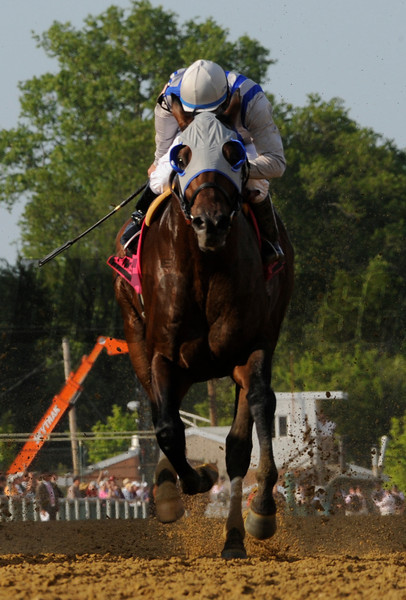 Alternation ridden by Luis Quinonez wins the 42nd running of The Pimlico Special at Pimlico Race Course in Baltimore, MD May 189, 2012.  <br /> Photo by Skip Dickstein