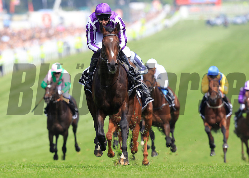 Camelot wins the Derby (purple cap) from Main Sequence (obscured) and Astrology (white cap), Epsom 02/06/12