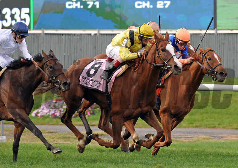 Dream Peace, Nahrain (8), Zagora and I'm A Dreamer (salmon cap) battle it out to the wire in the Gr1 Flower Bowl Invitational...<br /> Nahrain, John Velazquez up, won the 1 1/4 mi race on a soft track, in 2:05 56 for trainer Roger Varian...<br /> © 2012 Rick Samuels/The Blood-Horse