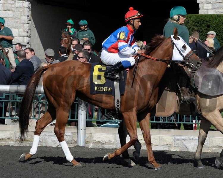 Caption: Groupie Doll<br /> Race 6 Thoroughbred Club of America and prior scenes. Scenes at Keeneland on Oct. 6, 2012.<br /> Keeneland<br /> RAce6andPrior10_6_12  image555<br /> Photo by Anne M. Eberhardt