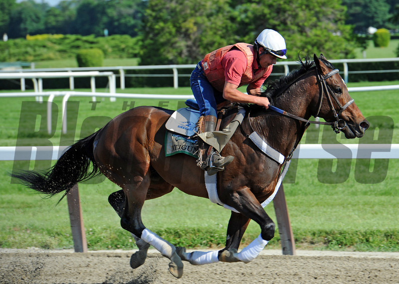 Atigun at Belmont Friday morning June 1st...<br /> © 2012 Rick Samuels/The Blood-Horse