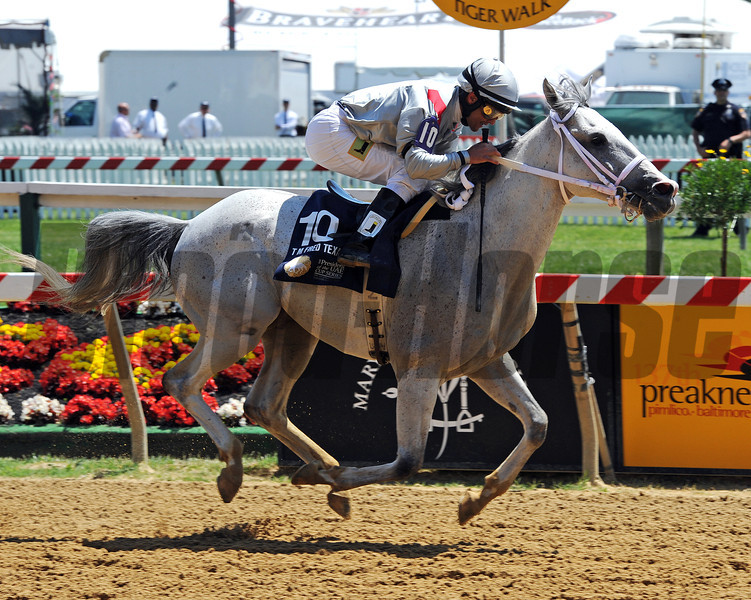 T M Fred Tex, Abel Castellano up, wins the Gr1 President Of United Arab Emirates Cup at Pimlico...<br /> © 2012 Rick Samuels/The Blood-Horse