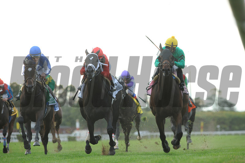 King David wins the 2012 Jamaica.<br /> Coglianes Photos