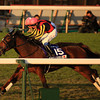 Gentildonna (Deep Impact x Donna Blini, Bertolini) wins a duel with Horse of the Year Orfevre in the final moments of the 32nd Japan Cup at Tokyo Racecourse on November 25th, 2012.<br /> Photo by Naoji Inada
