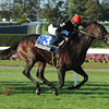 Boisterous wins the 2012 Knickerbocker.<br /> Coglianese Photos