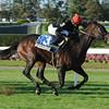 Boisterous wins the 2012 Knickerbocker.<br /> Coglianese Photos