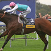 Racing from Ascot 20/10/12 Champion Stakes.<br /> Frankel (left) wins<br /> Trevor Jones Photo