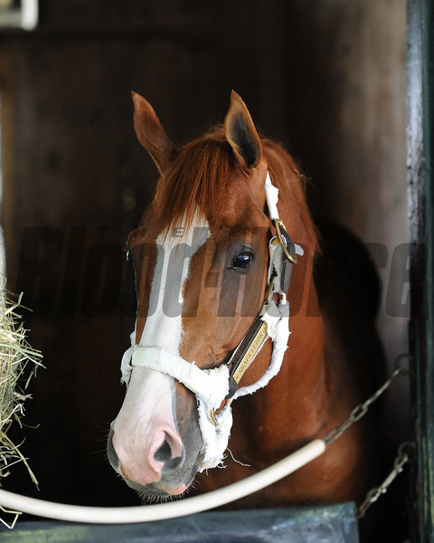 Shackleford<br /> Coglianese Photos/NYRA
