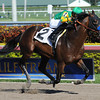 Citrus Kid allowance win at Gulfstream, December 19, 2012.<br /> Coglianese Photos