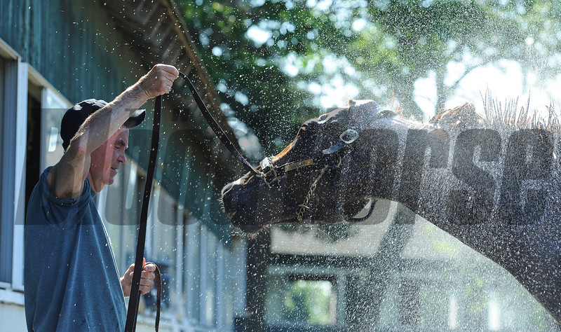 Dullahan, with groom/hotwalker Jimmy Drowns, getting a bath Friday morning at Belmont...<br /> © 2012 Rick Samuels/The Blood-Horse