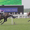 So You Think wins the 2012 Prince of Wales's.<br /> Photo by Trevor Jones