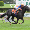 Noble Tune wins the Pilgrim Stakes.<br /> Photos by Coglianese Photos