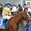 Jersey Town, Javier Castellano up<br /> © 2012 Rick Samuels/The Blood-Horse