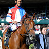 Caption: Groupie Doll<br /> Race 6 Thoroughbred Club of America and prior scenes. Scenes at Keeneland on Oct. 6, 2012.<br /> Keeneland<br /> RAce6andPrior10_6_12  image602<br /> Photo by Anne M. Eberhardt
