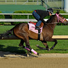Caption:  Oaks Lily working<br /> Kentucky Derby and Kentucky Oaks contenders on the track at Churchill Downs near Louisville, Ky. on April 27, 2012.<br /> AMWorks4_27_12 image540<br /> PHoto by Anne M. Eberhardt