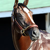 Gemologist at Churchill Downs on May 2, 2012.<br /> Chad Harmon