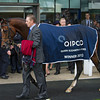 Champions Day, Ascot, England 10/20/12, Photo by Mathea KelleyExcelebration, Joseph O'Brien up, wins the Queen Elizabeth II Stakes, Champions Day, Ascot, England 10/20/12, Photo by Mathea Kelley
