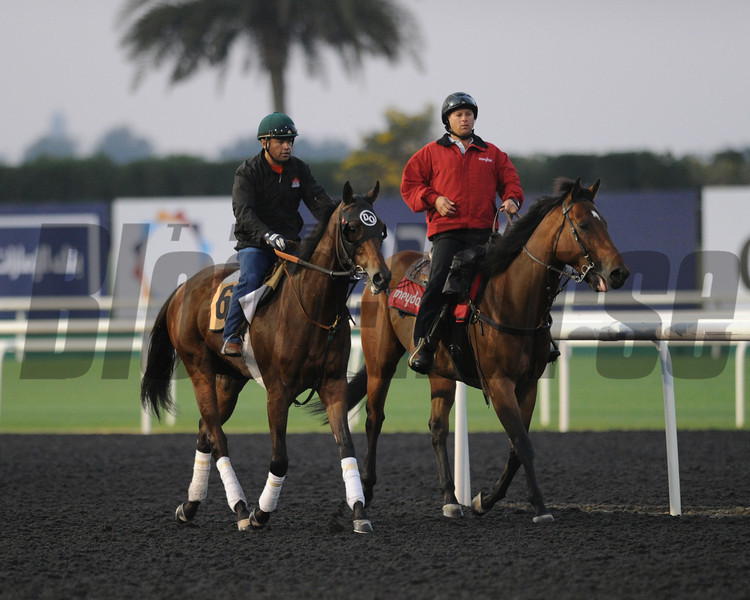 Private Zone, Meydan, Dubai World Cup 2013; photo by Mathea Kelley; Dubai Golden Shaheen;