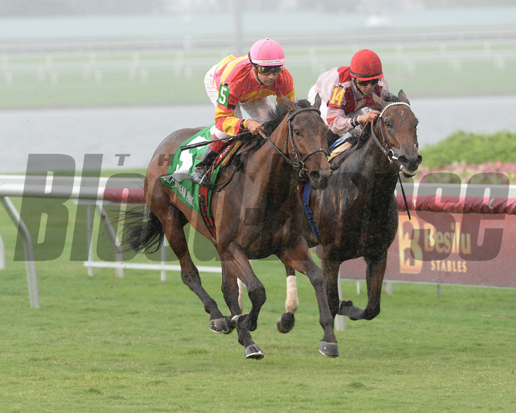 Courtesan wins the 2013 Juvenile Filly Turf Stakes.<br /> Coglianese Photos