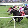 Effie Trinket wins the 2013 Ticonderoga Stakes.<br /> Coglianese Photos