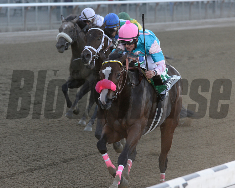 Cal MacWilliam and Neil Teitelbaum's homebred Miss Behaviour proved best Sept. 29 in the six-furlong Matron Stakes (gr. II) at Belmont Park. The Pennsylvania-bred daughter of Jump Start covered the trip in 1:10.57, topping even-money choice Sweet Whiskey by a length in the $200,000 event for 2-year-old fillies.<br /> Coglianese Photos/Joe Labozzetta