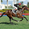 Point of Entry captures The Kitten's Joy Gulfstream Park Turk Handicap (Grade I) at Gulfstream Park on 2/9/2013 with John R. Velazquez up.<br /> Coglianese Photos/Leslie Martin