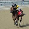 Empire Dreams wins the 2013 New York Stallion Series - Great White Way.<br /> Coglianese Photos