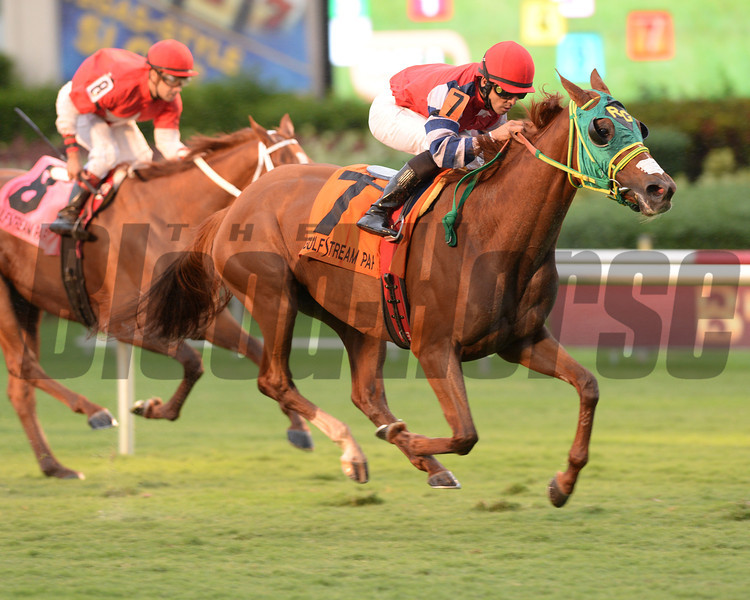 Parranda wins the 2013 Millions Filly and Mare Turf Preview Stakes.<br /> Coglianese Photos