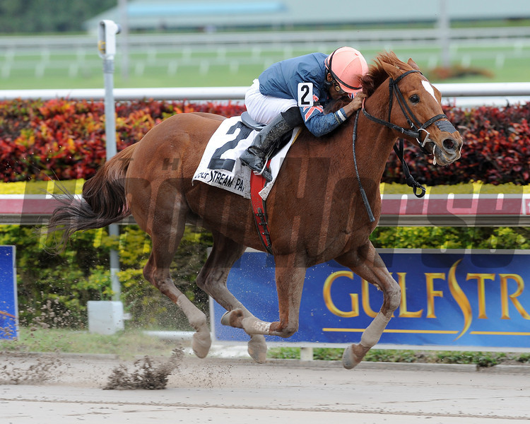 Golden Mystery captures The Florida Sunshine Millions Fillies and Mares Sprint at Gulfstream Park on 1/19/2013 with Luis Saez up.<br /> Coglianese Photos/Courtney Heeney
