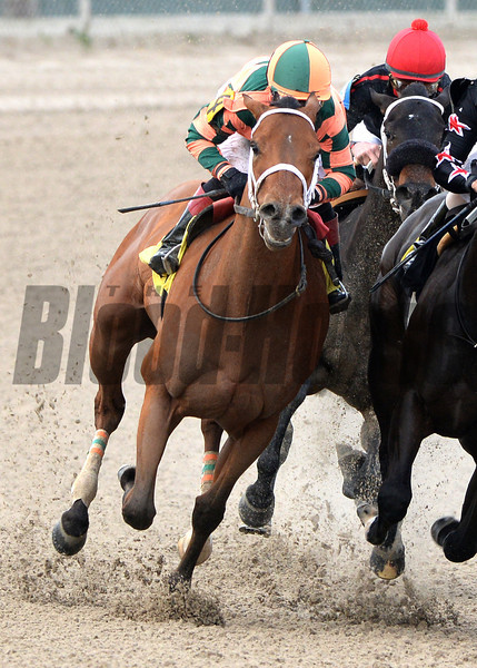12/21/2013  -  Jockey Rosie Napravnik aboard Divine Beauty turns for home on the outside and begins her charge to the front to win the 4th running of the $60,000 Letellier Memorial Overnight Stakes at Fair Grounds.  Hodges Photography / Alexander Barkoff